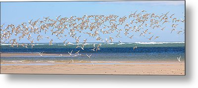 My Tern Metal Print by Bill Wakeley