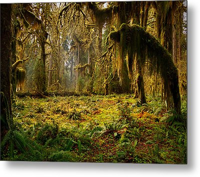 Mystical Forest Metal Print by Leland D Howard