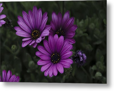 Mystical Purple Metal Print by Penny Lisowski