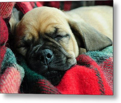 Nap Time Metal Print by Lisa Phillips