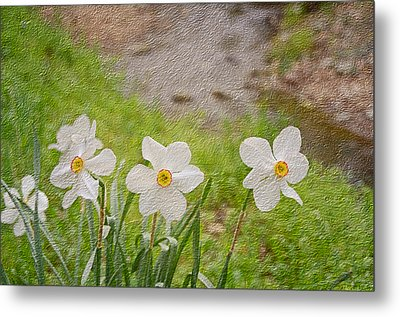 Narcissi Metal Print by Steven  Michael