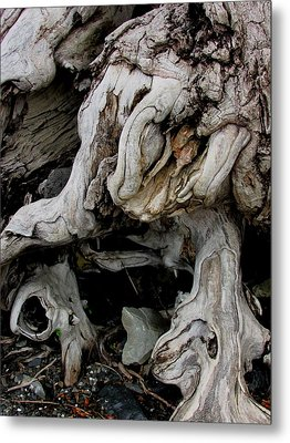Narley Metal Print by Will Boutin Photos