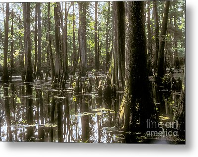 Natchez Trace Wetlands Metal Print by Bob Phillips