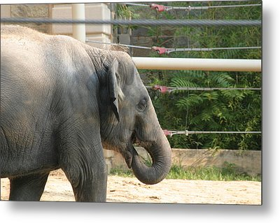 National Zoo - Elephant - 121212 Metal Print by DC Photographer