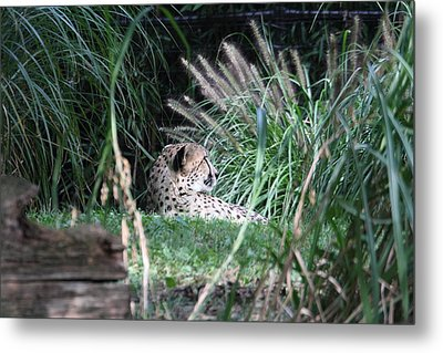 National Zoo - Leopard - 01131 Metal Print by DC Photographer
