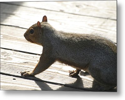 National Zoo - Mammal - 12122 Metal Print by DC Photographer