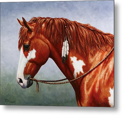 Native American Pinto Horse Metal Print by Crista Forest