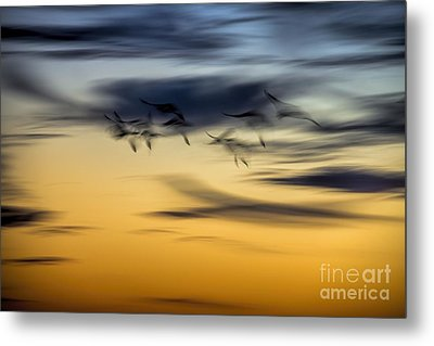 Natural Abstract Art Metal Print by Peggy Hughes
