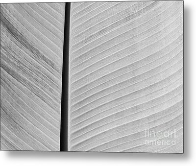 Natural Lines Metal Print by Sabrina L Ryan