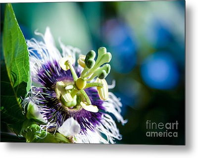 Nature In Poetry Metal Print by Sharon Mau