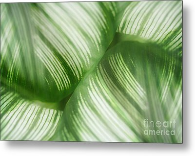 Nature Leaves Abstract In Green 2 Metal Print by Natalie Kinnear