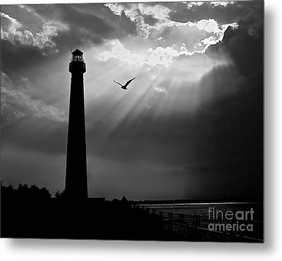 Nature Shines Brighter In Black And White Metal Print by Mark Miller