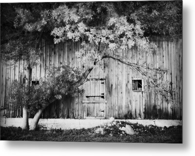 Natures Awning Bw Metal Print by Julie Hamilton