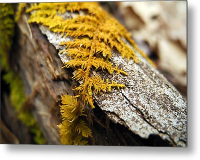 Nature's Carpet Metal Print by Christina Rollo