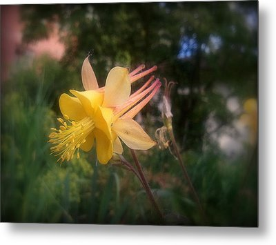 Natures Star Metal Print by Heather L Wright