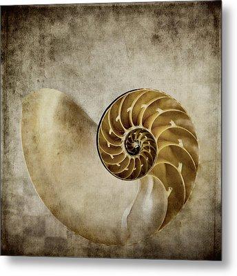 Nautilus Shell Metal Print by Carol Leigh