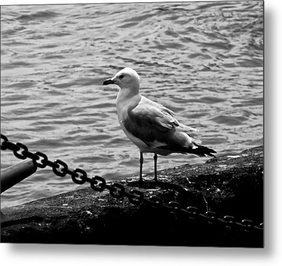 Navy Pier Seagull Metal Print by Chris Flees