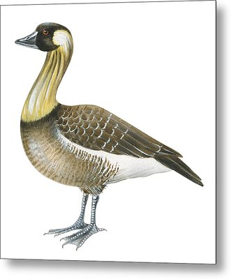 Nene Metal Print by Anonymous