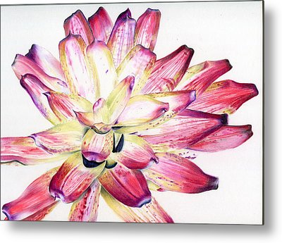 Neoregelia Picasso Metal Print by Penrith Goff