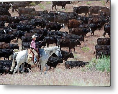 Nevada Cowboy Herding Cattle Metal Print by Jim West