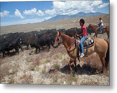 Nevada Cowgirls Herding Cattle Metal Print by Jim West