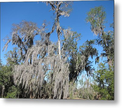 New Orleans - Swamp Boat Ride - 1212138 Metal Print by DC Photographer