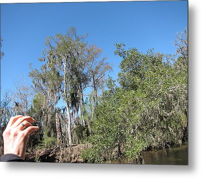 New Orleans - Swamp Boat Ride - 1212152 Metal Print by DC Photographer