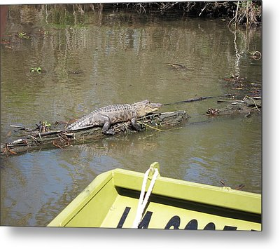 New Orleans - Swamp Boat Ride - 1212160 Metal Print by DC Photographer