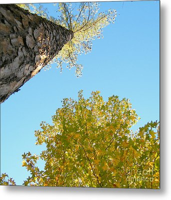 New Perspective On Autumn Leaves Metal Print by Cheryl Hardt Art
