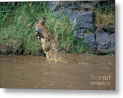 Nile Crocodile Metal Print by Art Wolfe