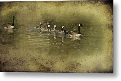 No Time For Stragglers Metal Print by Diane Schuster