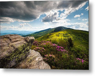 North Carolina Blue Ridge Mountains Roan Rhododendron Flowers Nc Metal Print by Dave Allen