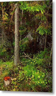 Northern Forest 1 Metal Print by Jenny Rainbow