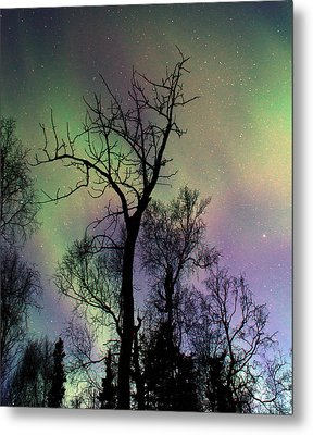 Northern Lights Cottonwood Metal Print by Ron Day