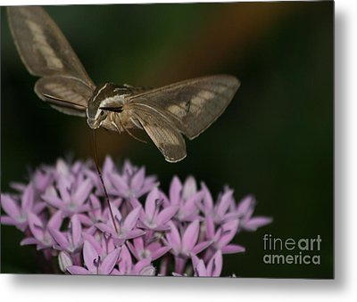 Not A Hummer Metal Print by Marty Fancy