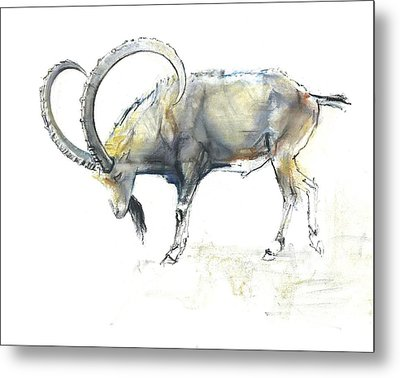 Nubian Ibex Metal Print by Mark Adlington