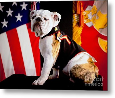 Official Mascot Of The Marine Corps Metal Print by Pg Reproductions