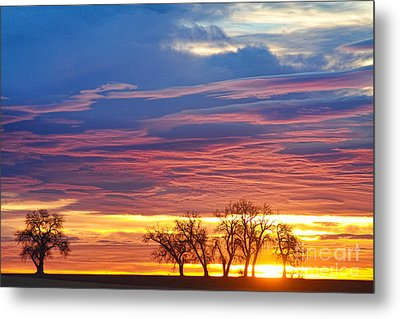 Oh What A Beautiful Morning Metal Print by James BO  Insogna