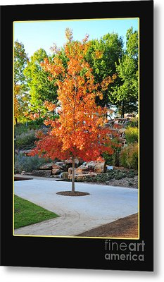 Oklahoma Fall Metal Print by Randi Grace Nilsberg