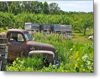 Old Chevy Pickup In Orchard Metal Print by Jeremy Evensen