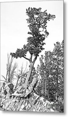 Old Gnarly Tree Metal Print by Edward Fielding