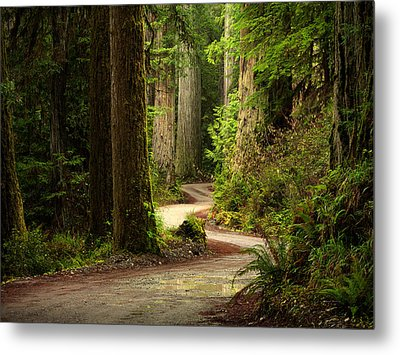 Old Growth Forest Route Metal Print by Leland D Howard