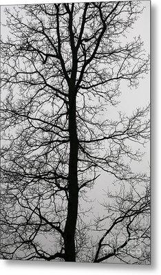 Old Oak In The Grey Sky.  Metal Print by Tanya Polevaya