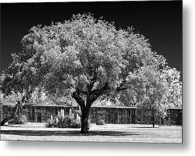 Old Oak Tree Mission San Jose Metal Print by Christine Till