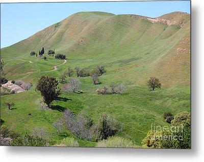 Old Rose Hill Cemetery Atop The Rolling Hills Landscape Of The Black Diamond Mines California 5d2231 Metal Print by Wingsdomain Art and Photography
