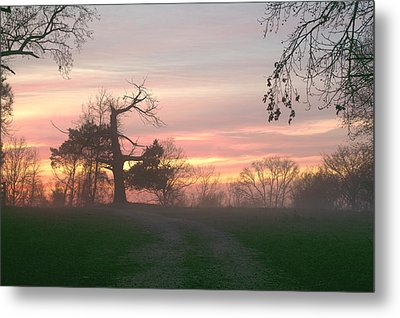 Old Tree At Sunset Metal Print by Brian Harig