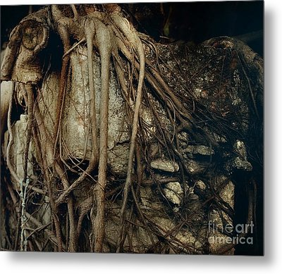 Old Tree On Broken Wall Metal Print by Yali Shi