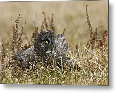 On Guard Metal Print by Inspired Nature Photography Fine Art Photography