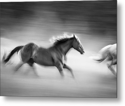 On The Run Metal Print by Dianne Arrigoni
