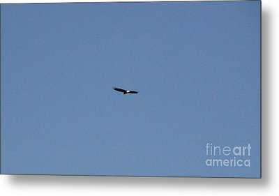 On The Wings Of A Eagle Metal Print by Daniel Henning